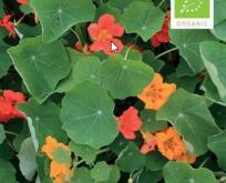 Blomsterkarse økologisk