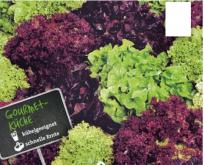 Salat Pluksalat Fitnes, blanding af flere farver.