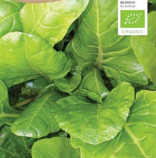 Bladbede hvid, Økologisk, Groene Gewone