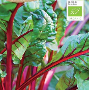 Bladbede Økologisk rød, Rhubarb Chard