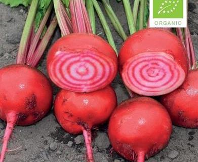 Rødbede Bolche, Økologisk rødstribet