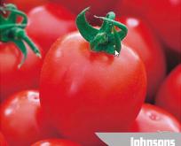 Tomat, Principe Borghese, til tørring.