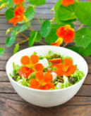 Spiselige blomsterblanding, 14 slags.
