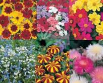 Sommerfugle, bier og insekter med sommerblomster.