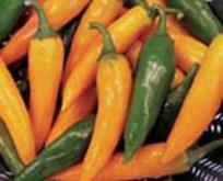 Peber Bulgarian Carrot