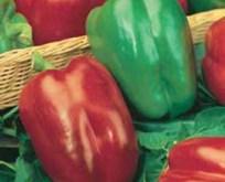 Peber California Wonder røde frugter