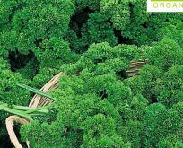 Persille, Krus økologisk frø