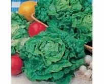 Salat, tom thumb