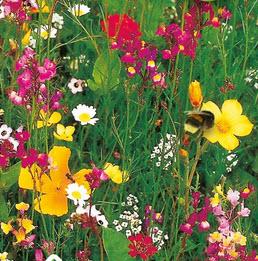 Blomsterblanding Tusind og En Nat