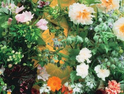 Spiselige blomsterblanding 4 slags