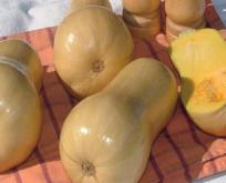 Vintersquash, Butternut med cremet nøddeagtig smag