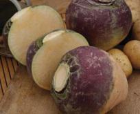Svensk turnip eller Swede, Gowrie