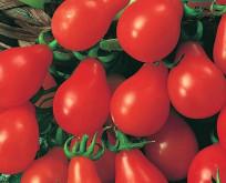 Tomat pære, Driv/friland Red Pear